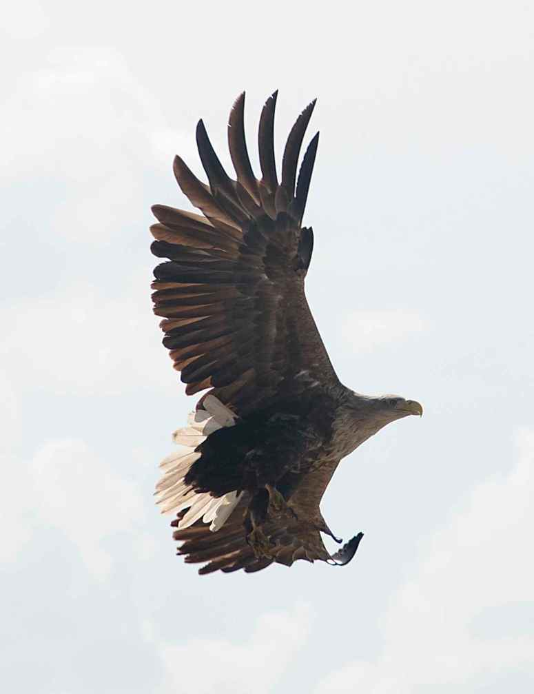 Saw an Seaeagle really close by, about 10 m.