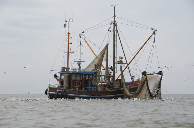 Krabben, små rejer er en lokal delicatesse / Krabben, small shrimps are a local delicacy.
